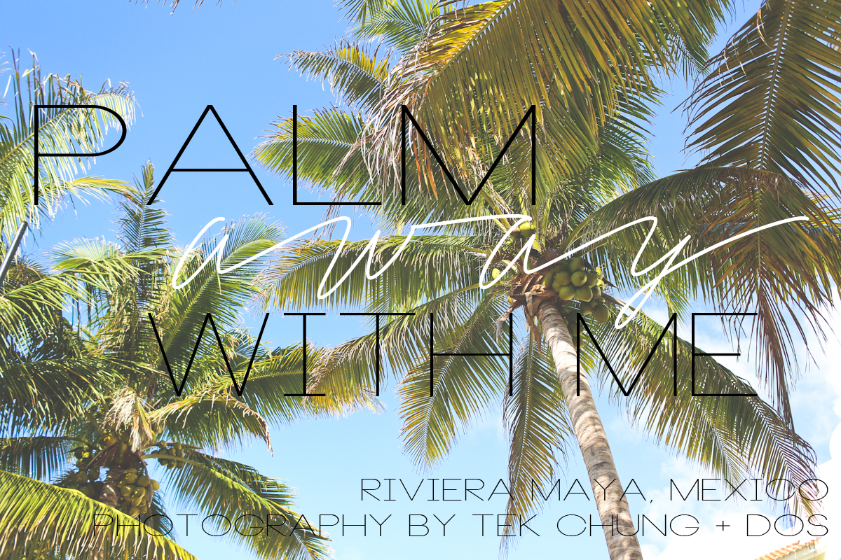 palm_away-2 copy